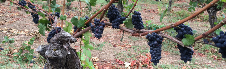 Legion of Pinot 2014 Release
